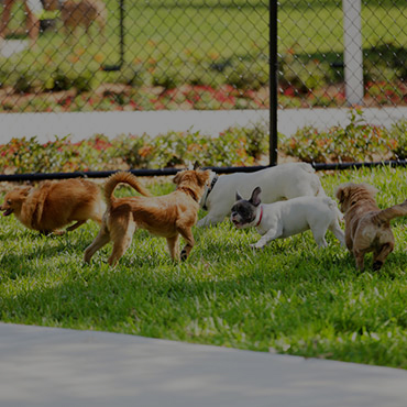 Large Dog Park at Settlers Landing Apartments